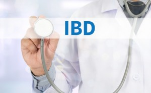IBD - Inflammatory Bowel Disease. Medical Concept Medicine doctor hand working on virtual screen