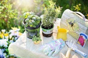 planting-780736_640